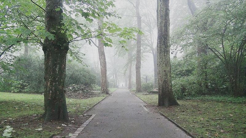 Fog_01225_0812.jpg